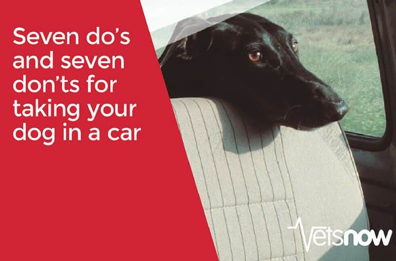 Travelling with your dog in the car – do's and don'ts